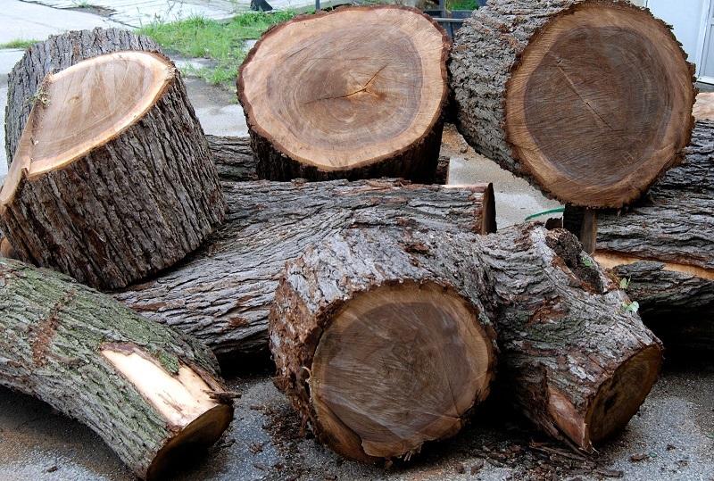 Gỗ óc chó là gì? Tìm hiểu thông tin về gỗ óc chó.