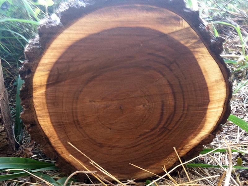 Gỗ óc chó thuộc nhóm gỗ quý và là gỗ nhập khẩu nước ngoài.