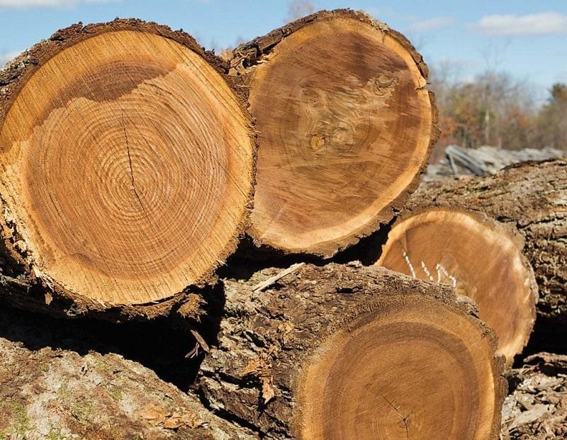 Giá bán gỗ óc chó trên thị trường sẽ tùy thuộc vào từng thời điểm