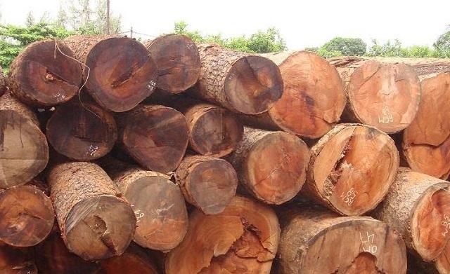 Gỗ gõ đỏ có tốt không? Có mấy loại gỗ gõ đỏ? Thông tin chi tiết