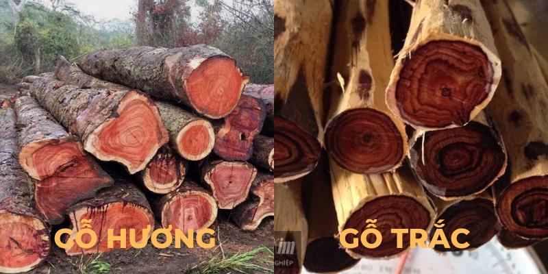So sánh gỗ hương và gỗ trắc trong lĩnh vực nội thất